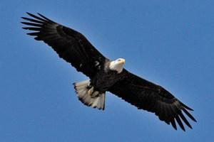 eagle high